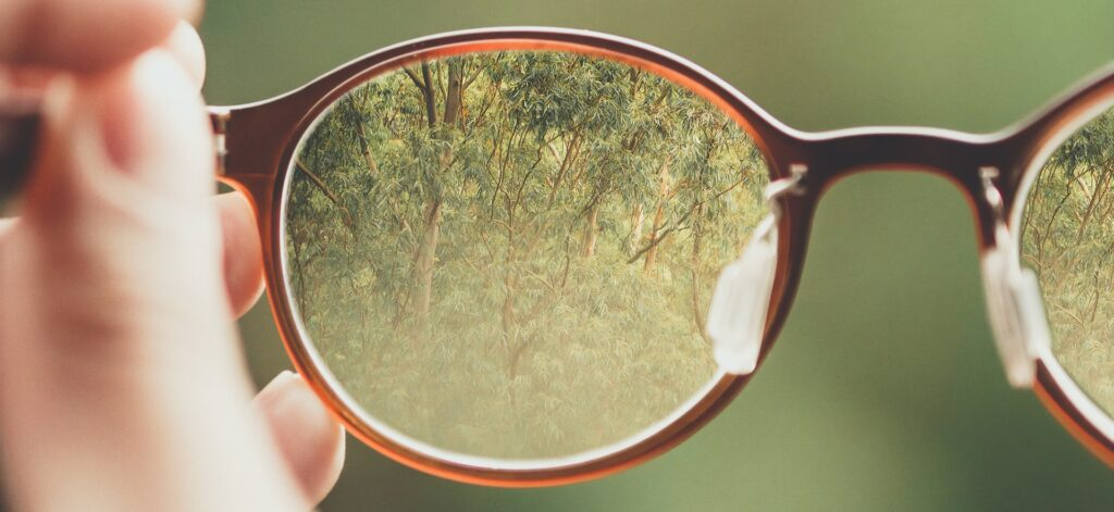 image of trees through some glasses